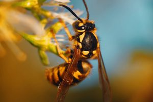 Close up image of wasp on flower