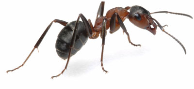 Ant Killer Power Ant Control Products At Pest Expert Com