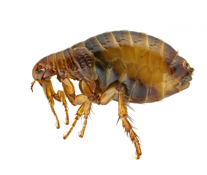 Flea Spray Treatment Products For The Home From Pest Expertcom