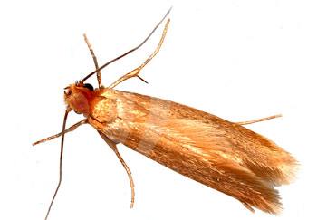 Moth Killer Products From Pest Expert Get Rid Of Clothes Moths